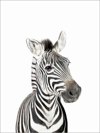 Wood print  Baby Zebra - Sisi And Seb