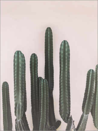 Canvas print  Mexican cactus - Sisi And Seb