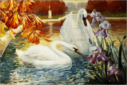 Premium poster  Swans on a pond - Fernand Toussaint