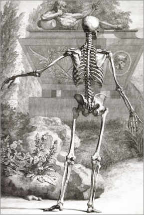 Premium poster The bone skeleton, rear view (Plate II)