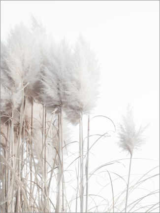 Wood print  Pampas grass II - Magda Izzard
