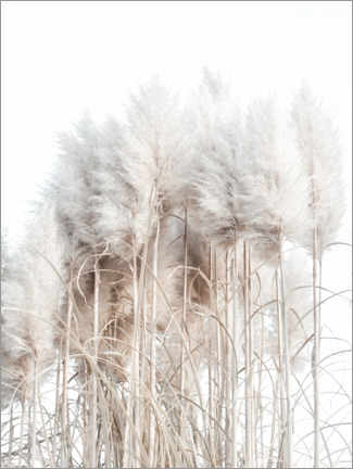 Wood print  Pampas grass I. - Magda Izzard