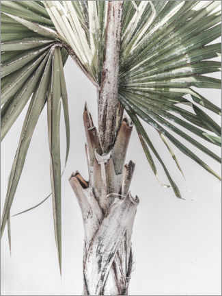 Gallery print  Palm tree - Magda Izzard