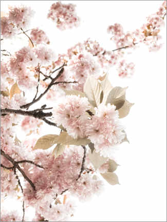 Canvas print  Spring flowering - Magda Izzard