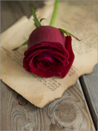 Acrylic print  Still life with red rose and old letter - Jaroslaw Blaminsky
