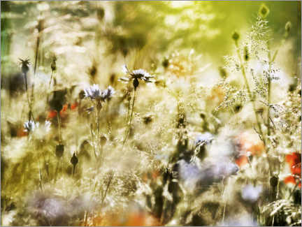 Foam board print  Magical wildflower meadow - Lichtspielart