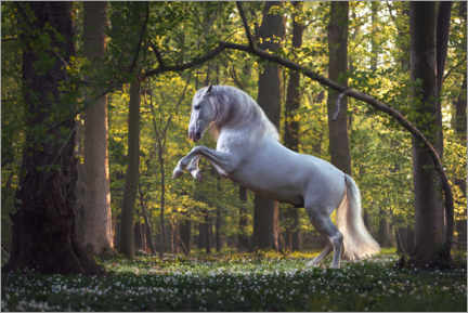 Premium poster White horse in the fairytale forest