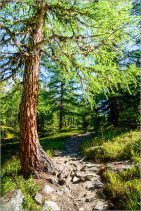 Acrylic print  Hiking trail through Lerchtal in Lotschental - Peter Wey