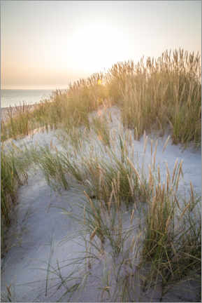 Premium poster  Morning sun in the dunes on Sylt - Christian Müringer