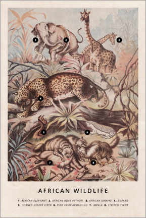 Premium poster  African wildlife (vintage) - Wunderkammer Collection