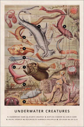 Wood print  Underwater creatures - Wunderkammer Collection