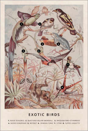 Premium poster  Exotic birds - Wunderkammer Collection