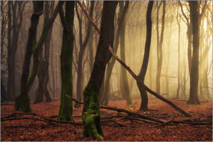 Acrylic print  Just a forest scene - Martin Podt