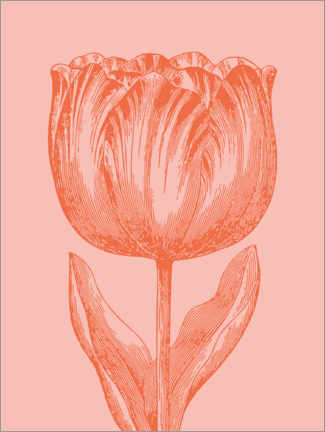Canvas print  Apricot spring tulip - apricot and birch