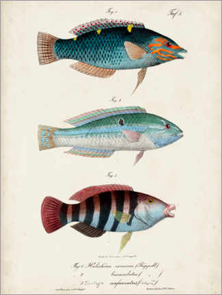 Wood print  Antique fish trio - Vision Studio