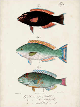 Wood print  Antique fish trio II - Vision Studio