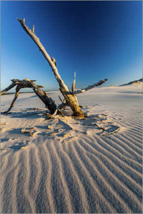 Premium poster  Driftwood in the Slovak National Park - Mikolaj Gospodarek