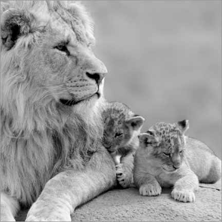 Premium poster  Young Lions in Black and White