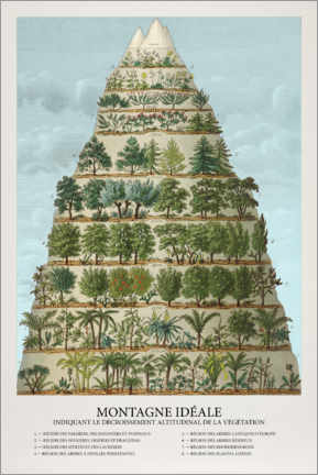Wall sticker  Trees and plants in the mountains (French) - Wunderkammer Collection