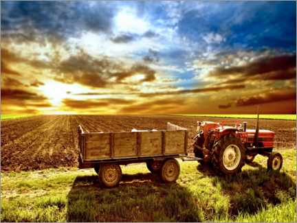 Premium poster  Tractor in the evening sun - Jörg Gamroth