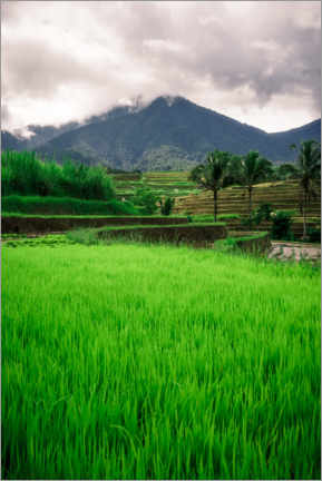 Canvas print  Rice field in Bali - Road To Aloha