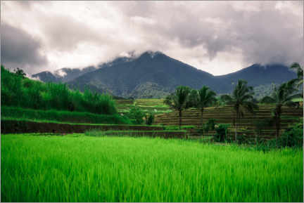 Wall sticker  Rice fields in Bali - Road To Aloha