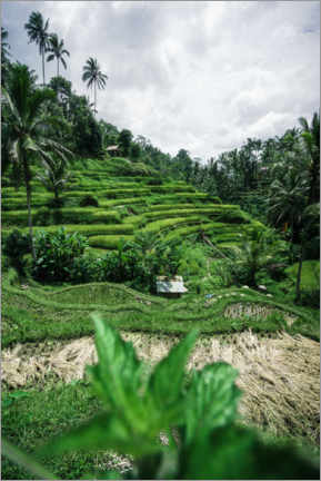 Aluminium print  Rice terraces in Bali - Road To Aloha