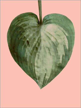Premium poster Philodendron on pink