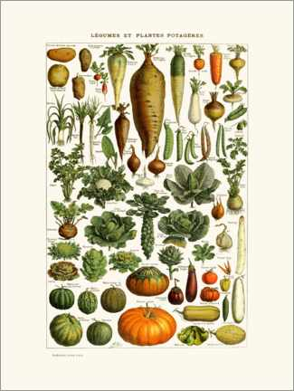 Canvas print  Antique vegetable plate in French - Patruschka