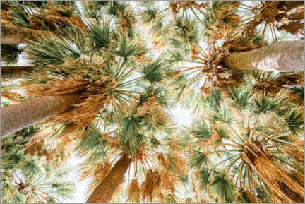 Gallery print  Palm Trees In Cannes Of French Riviera - Radu Bercan
