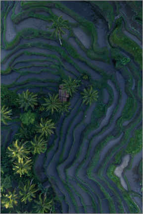 Premium poster  Tropical fields from above - Studio Nahili