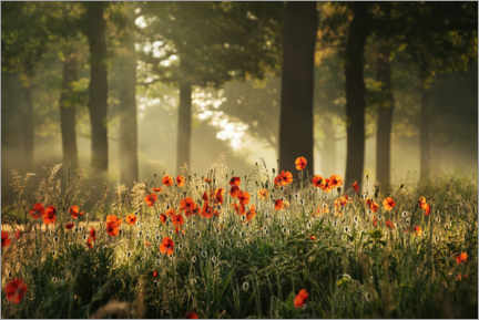 Premium poster The poppy forest