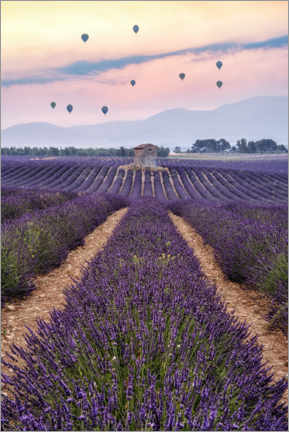 Premium poster Balloonist Over a Sea of Flowers