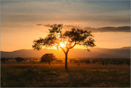 Premium poster Sunset in the savannah of the Kidepo Valley, Uganda