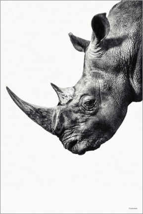 Wall sticker  Rhino - Underdott