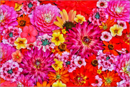 Aluminium print  Flower pattern with a large group of flowers II - Darrell Gulin