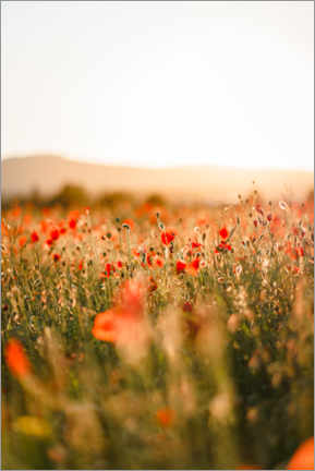 Gallery print  Field of poppies in the sunrise - Igor Kondler