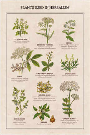 Acrylic print  Plants used in herbalism - Wunderkammer Collection