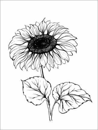 Colouring poster Big sunflower