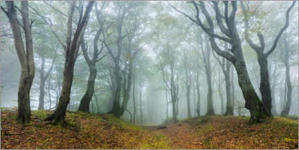 Premium poster Mysterious forest in the fog