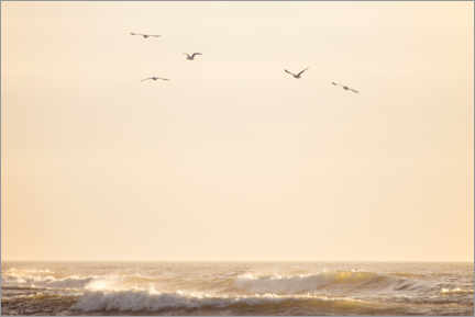 Premium poster Seagulls fly over the North Sea