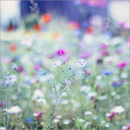 Wood print  Colourful Flower Meadow in Summer - Nadja Jacke