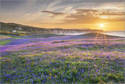 Premium poster  Sea of flowers on the coast of Ireland at sunset - The Wandering Soul
