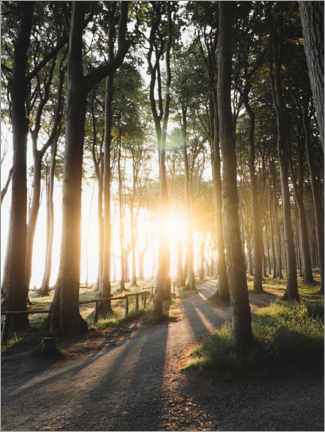 Gallery print  Sunrise in the ghost forest - Lukas Saalfrank