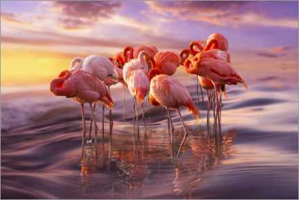Wood print  Flamingo siesta - Adrian Borda