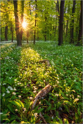 Premium poster  Spring evening in the forest - Dave Derbis