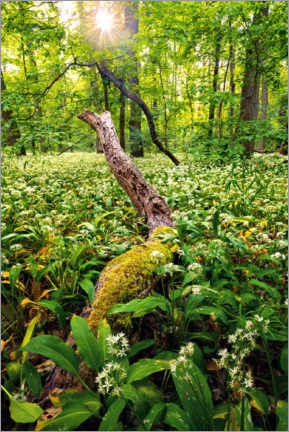 Premium poster  Spring in the forest - Dave Derbis