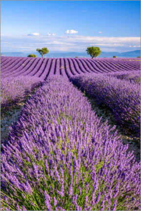 Wood print  Summer in Provence - Achim Thomae