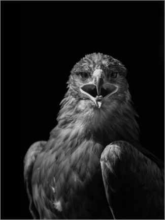 Acrylic print  Majestical eagle - Paul Heasman