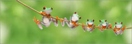 Premium poster  Funny frogs on a branch - Artur Cupak